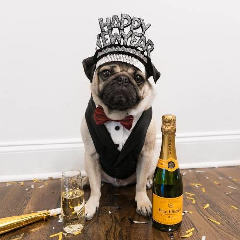 doug the pug new year